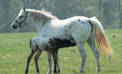 Our Brood Mares