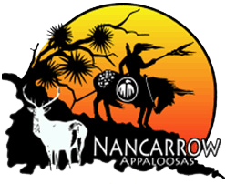Nancarrow Appaloosas